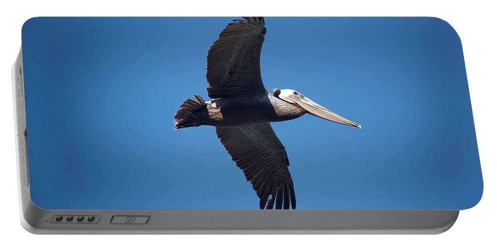 Pelican Portable Battery Charger featuring the photograph flying Pelican by Ralf Kaiser