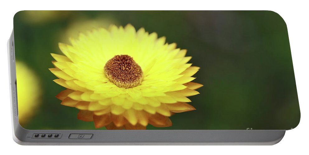Flower Portable Battery Charger featuring the photograph Focal Point by Stephen Mitchell