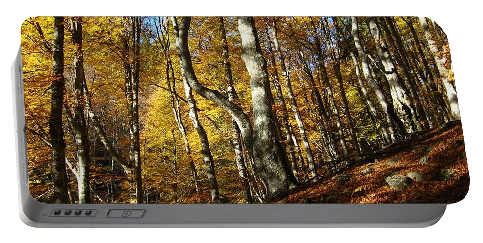 Fall Colors Portable Battery Charger featuring the photograph Forest Fall Colors 4 by Alina Cristina Frent
