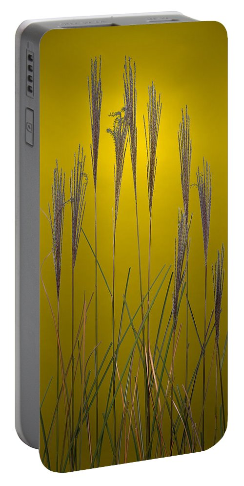 Grass Portable Battery Charger featuring the photograph Fountain Grass In Yellow by Steve Gadomski