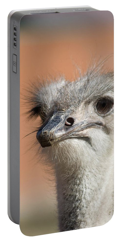 Football Portable Battery Charger featuring the photograph Fourth Quarter Letdown by Trish Tritz