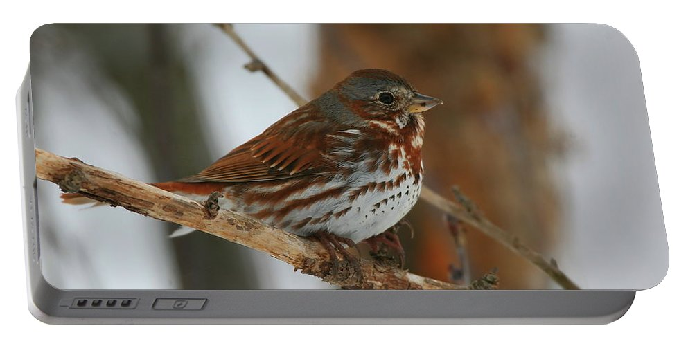 Sparrow Portable Battery Charger featuring the photograph Fox Sparrow by Bruce J Robinson
