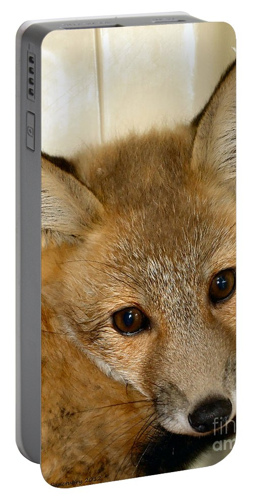 Fox Portable Battery Charger featuring the photograph Foxy Broad by Art Dingo