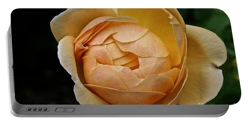 Outdoors Portable Battery Charger featuring the photograph Fragrant English Rose by Susan Herber