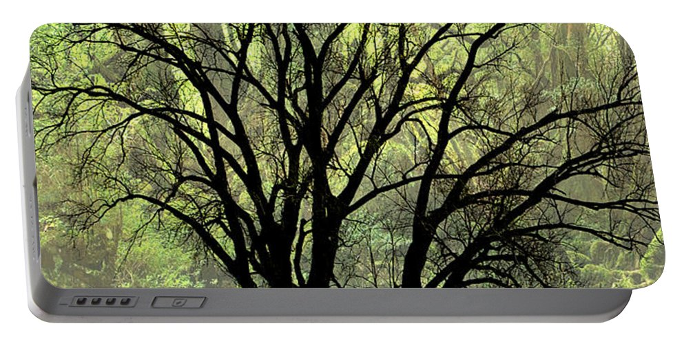 Tree Portable Battery Charger featuring the photograph Freaky Tree 2 by Marty Koch