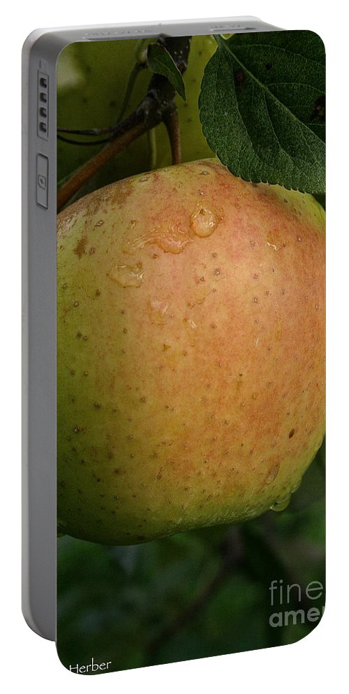 Landscape Portable Battery Charger featuring the photograph Fresh Apple by Susan Herber