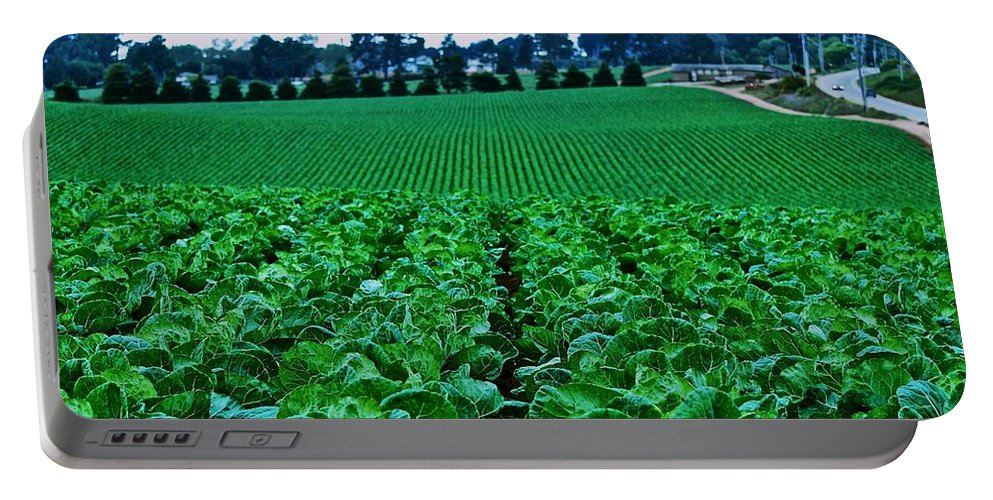 Cabbage Portable Battery Charger featuring the photograph Fresh Cabbage by Eric Tressler