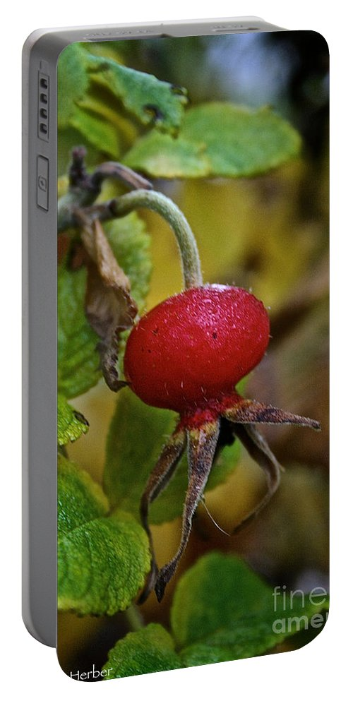 Flower Portable Battery Charger featuring the photograph Fresh Rose Hip by Susan Herber