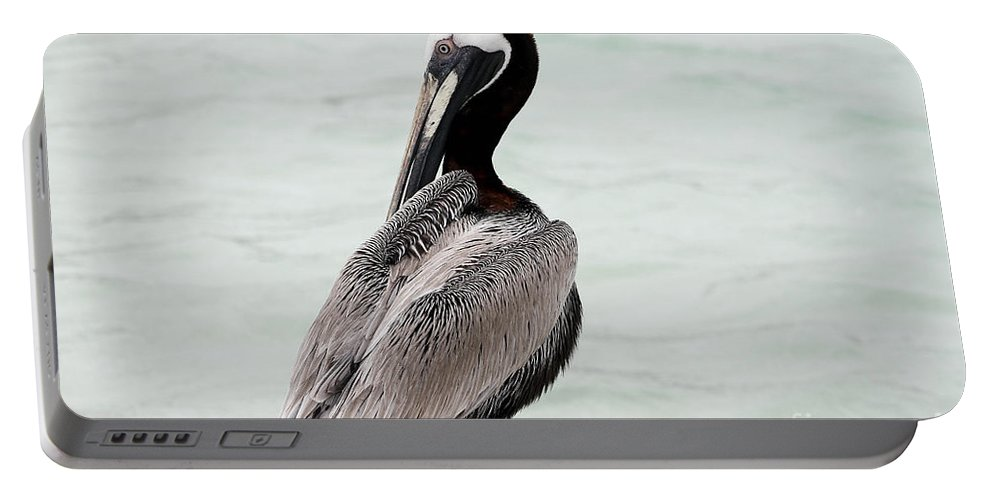 Bird Portable Battery Charger featuring the photograph Friendly Brown Pelican by Teresa Zieba