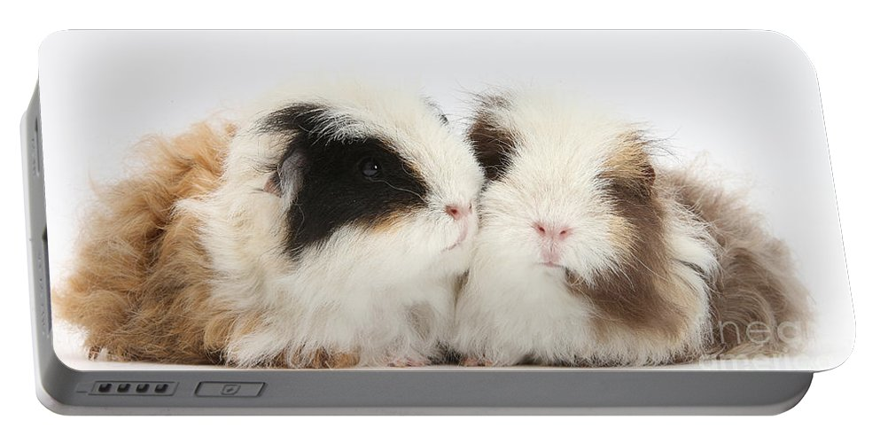 Nature Portable Battery Charger featuring the photograph Frizzy Alpaca Guinea Pigs by Mark Taylor