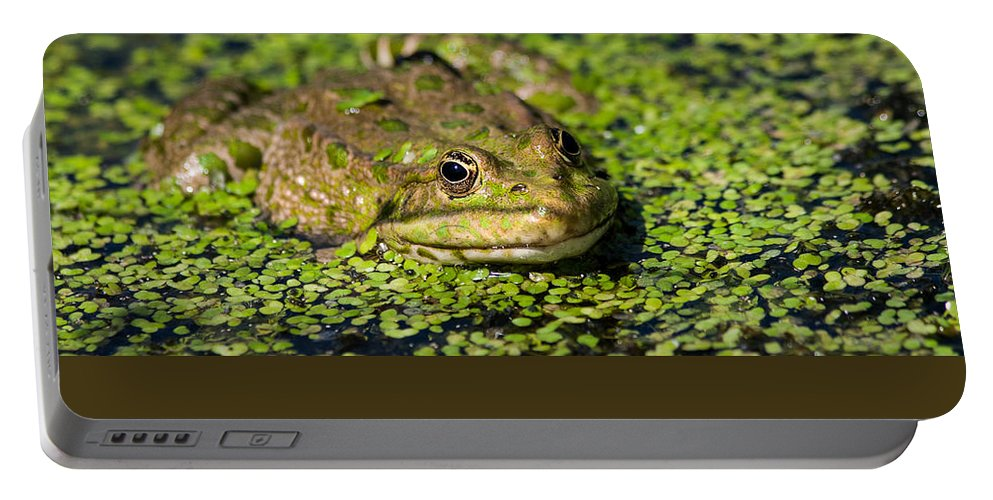 British Wildlife Centre Portable Battery Charger featuring the photograph Frog by Dawn OConnor