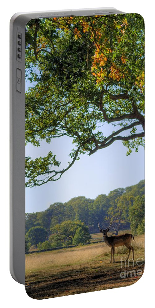 Fallow Deer Portable Battery Charger featuring the photograph From A Distance by Yhun Suarez