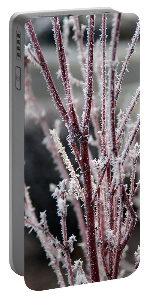 Coral Portable Battery Charger featuring the photograph Frosty Coral Maple by Mick Anderson