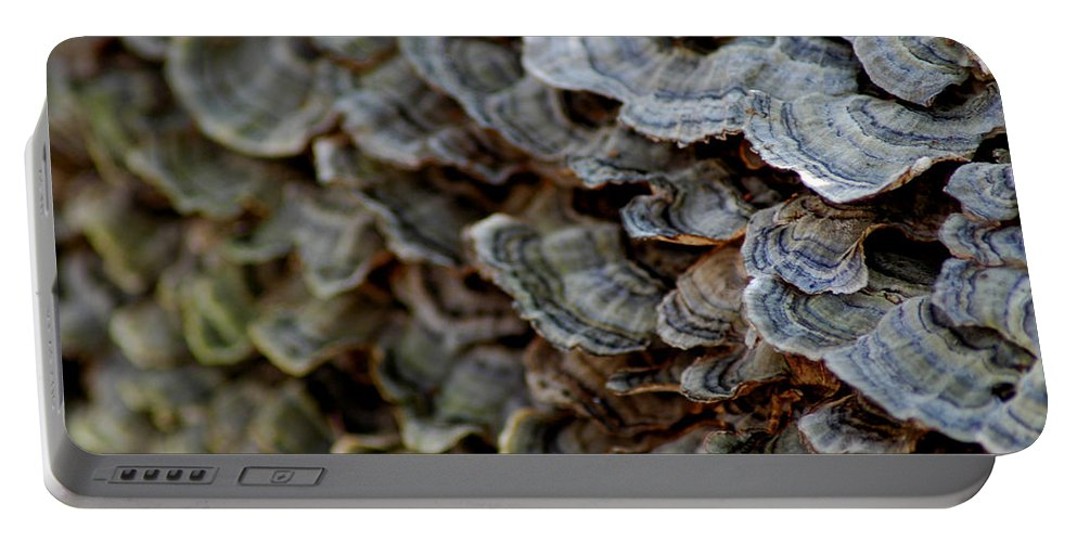 Usa Portable Battery Charger featuring the photograph Fungus by LeeAnn McLaneGoetz McLaneGoetzStudioLLCcom