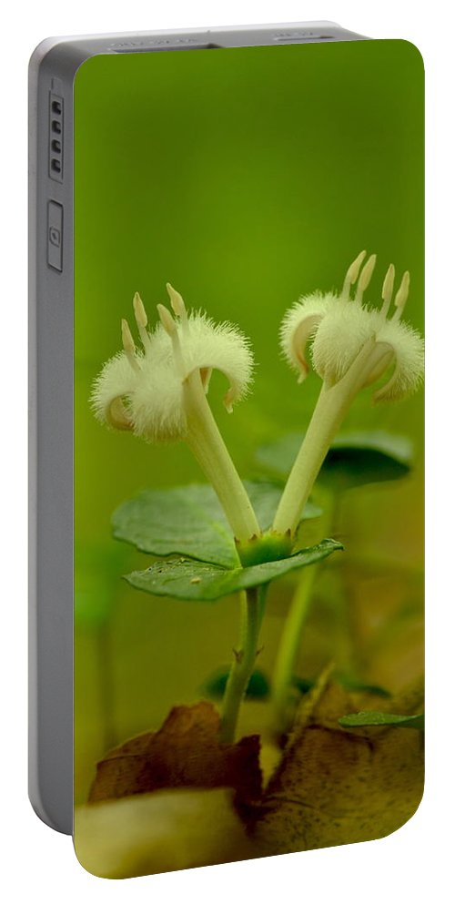 White Portable Battery Charger featuring the photograph Fuzzy Blooms by JD Grimes