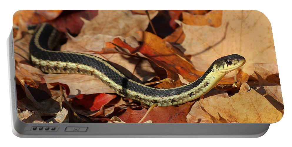 Garter Snake Portable Battery Charger featuring the photograph Garter Snake by Doris Potter