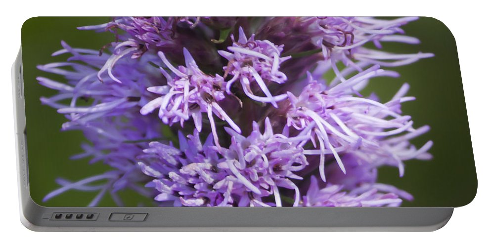 Gayfeather Portable Battery Charger featuring the photograph Gayfeather Squared by Teresa Mucha