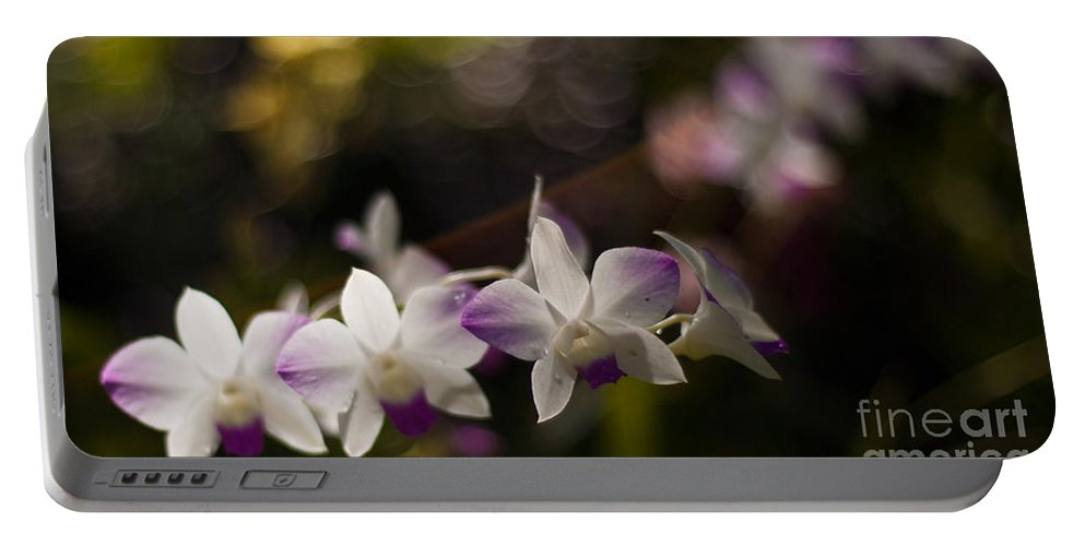 Tropical Portable Battery Charger featuring the photograph Gentle Light by Mike Reid