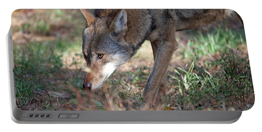 Wolf Portable Battery Charger featuring the photograph Gentle Wolf by Karol Livote