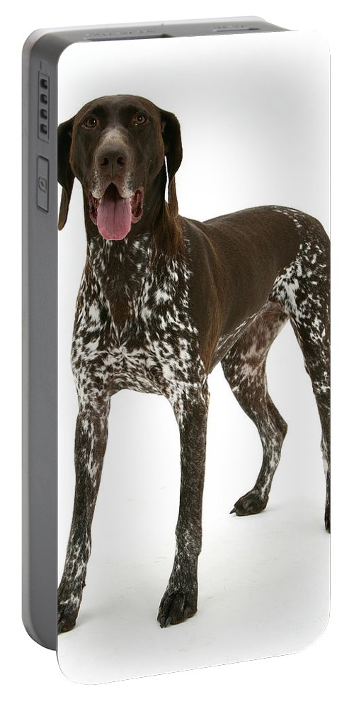 Animal Portable Battery Charger featuring the photograph German Pointer by Mark Taylor