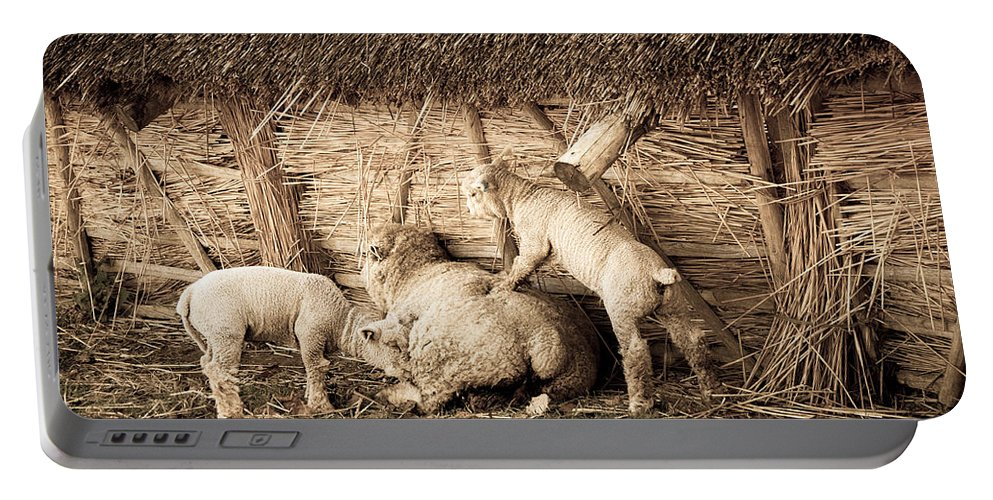 Lamb Portable Battery Charger featuring the photograph Get Up Mum by Dawn OConnor