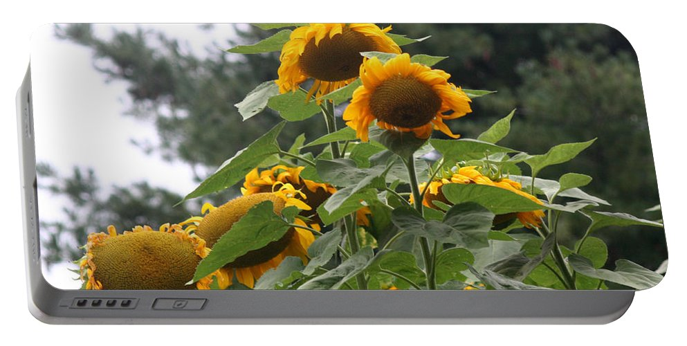 Flowers Portable Battery Charger featuring the photograph Giant Sunflowers by Smilin Eyes Treasures