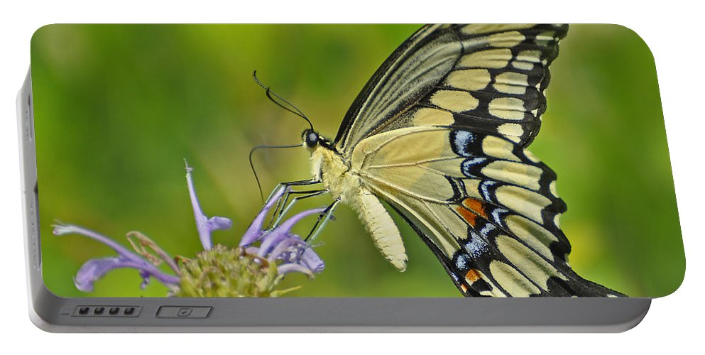 Butterfly Portable Battery Charger featuring the photograph Giant Swallowtail by Rodney Campbell