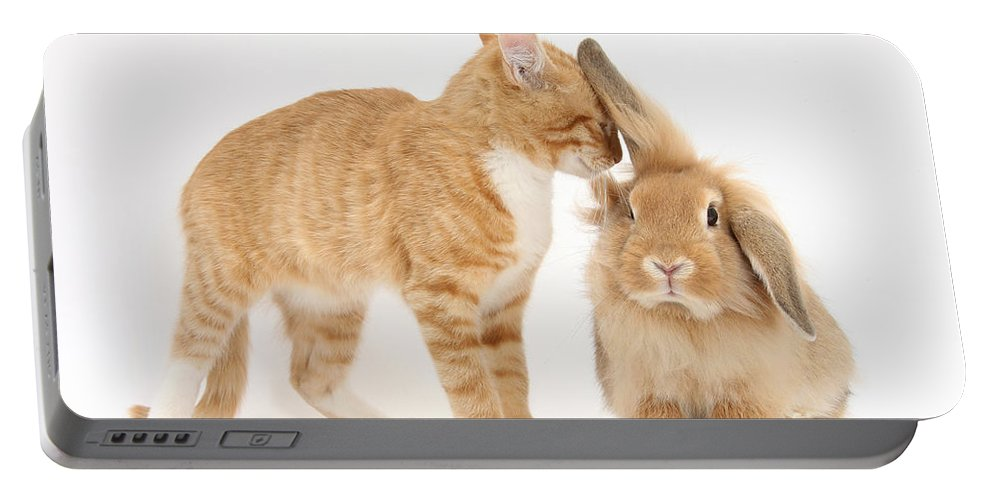 Nature Portable Battery Charger featuring the photograph Ginger Kitten With Sandy Lionhead Rabbit by Mark Taylor