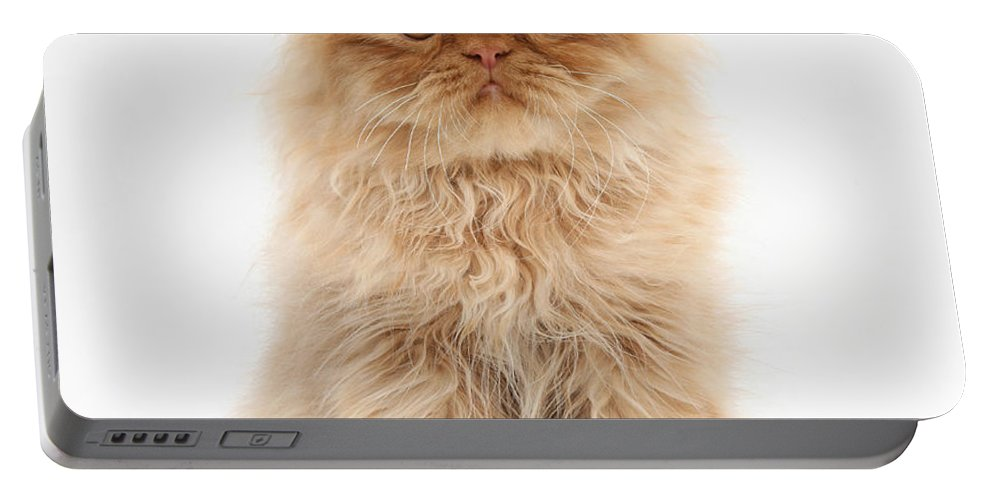 Animal Portable Battery Charger featuring the photograph Ginger Persian Kitten by Mark Taylor