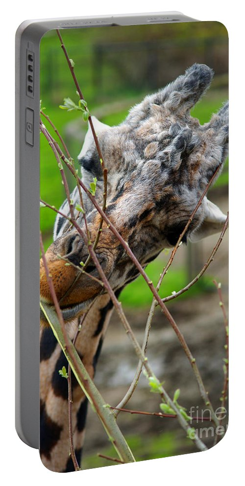 Giraffes Portable Battery Charger featuring the photograph Giraffe Eating by Randy Harris