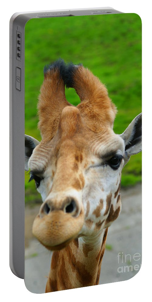 Giraffes Portable Battery Charger featuring the photograph Giraffe In The Park by Randy Harris