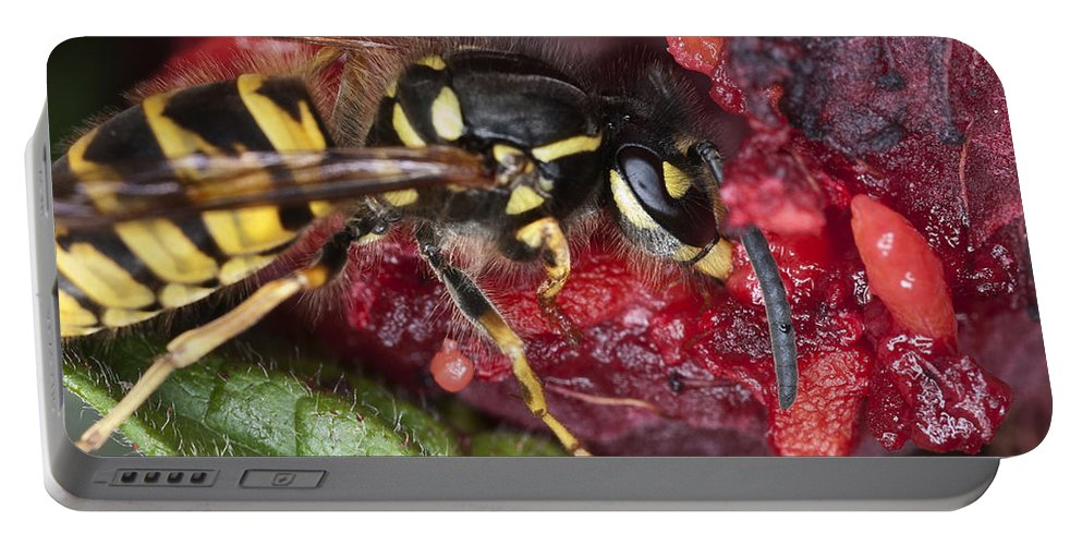 Wasp Portable Battery Charger featuring the photograph Go Away I'm Eating by Steve Purnell