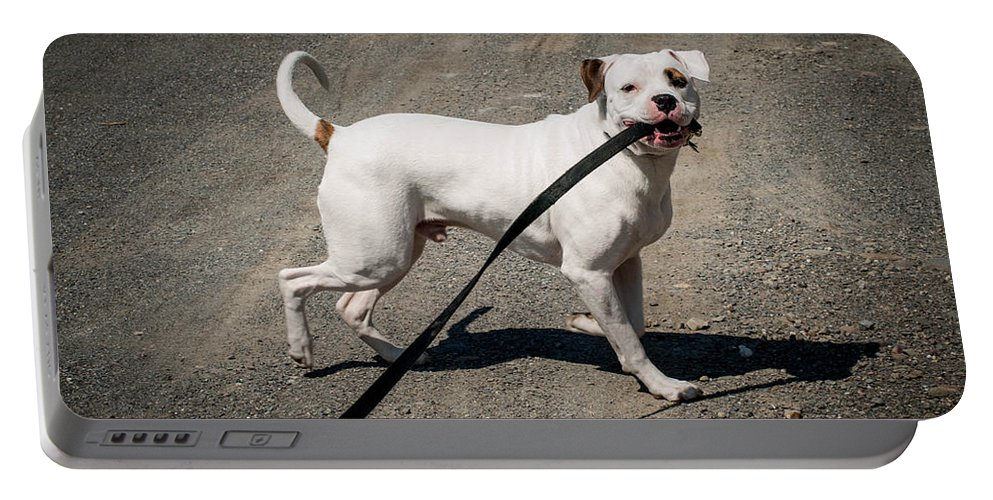 Dog Portable Battery Charger featuring the photograph Going For A Walk by Cathy Smith