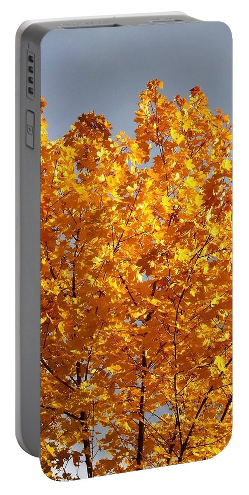 Golden Days Portable Battery Charger featuring the photograph Golden Days by Will Borden