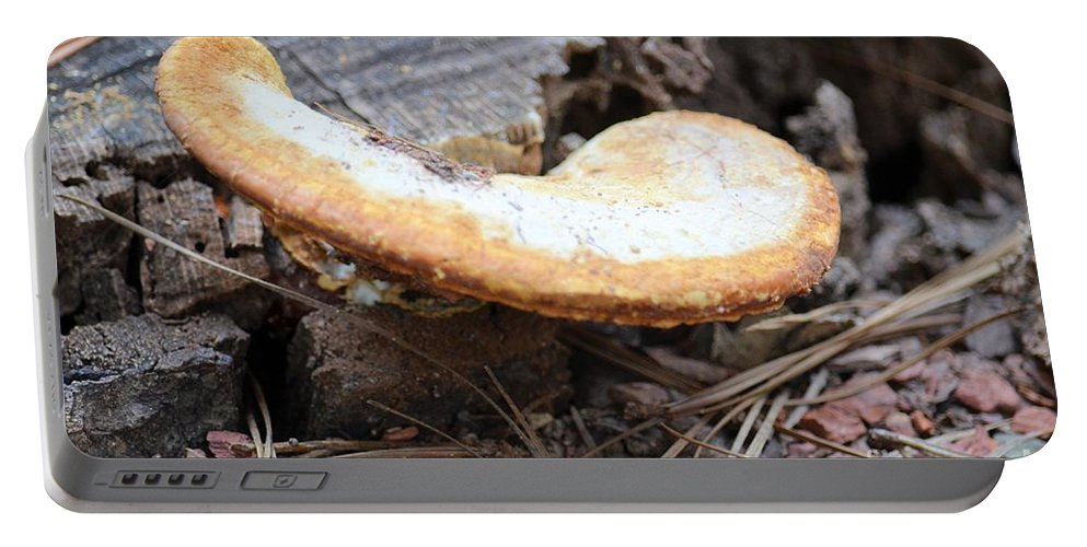 Golden Portable Battery Charger featuring the photograph Golden Edged Mushroom by Maria Urso