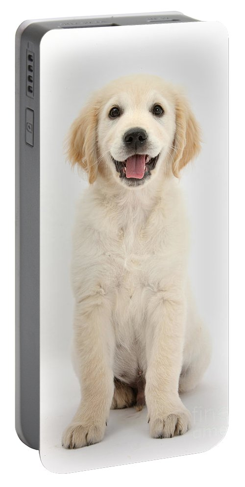 Animal Portable Battery Charger featuring the photograph Golden Retriever Puppy by Mark Taylor