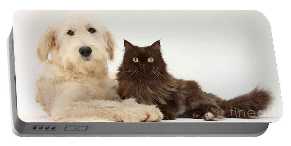 Animal Portable Battery Charger featuring the photograph Goldendoodle And Chocolate Cat by Mark Taylor