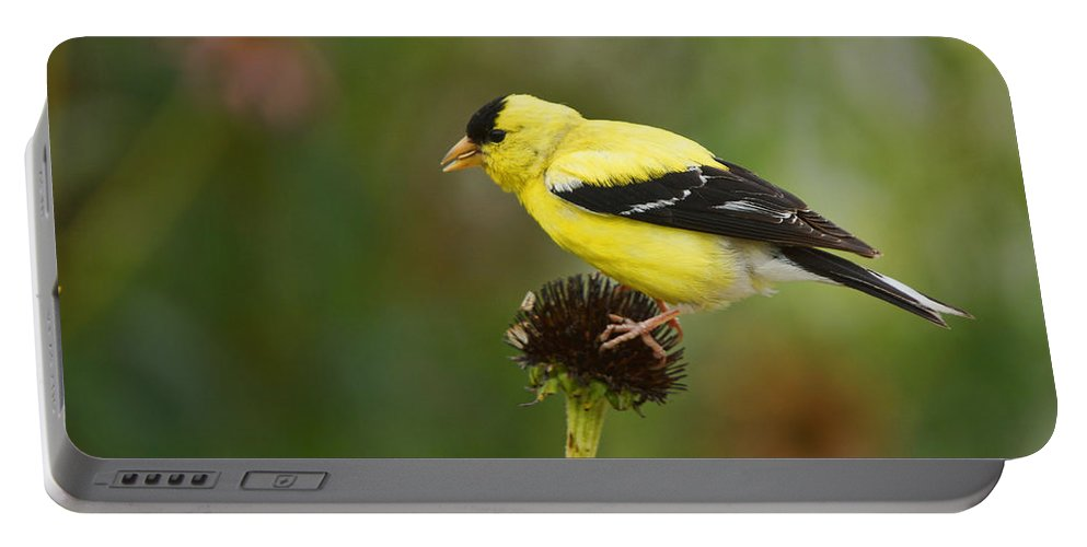 Bird Portable Battery Charger featuring the photograph Goldfinch by Alan Hutchins