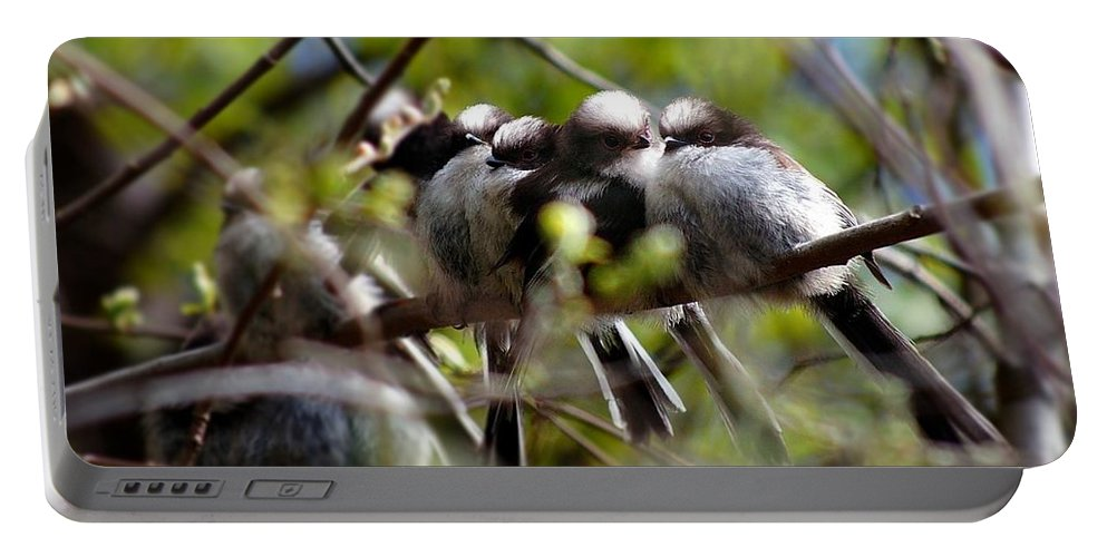 Long-tailed Tits Portable Battery Charger featuring the photograph Gossip Birds by Gavin Macrae