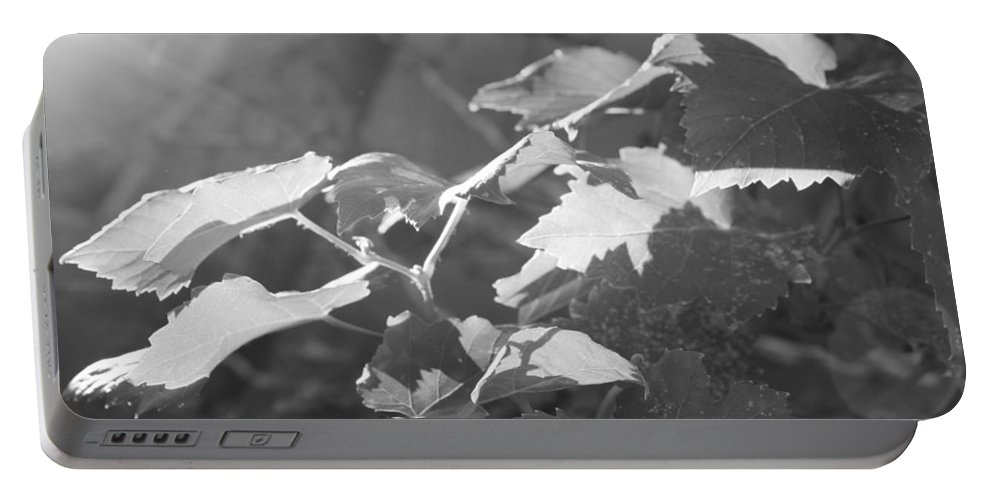 Grapevine Portable Battery Charger featuring the photograph Grapevine In Morning Light by Kume Bryant