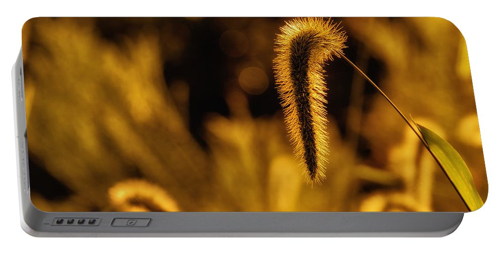 Da 18-135 Wr Portable Battery Charger featuring the photograph Grass In Golden Light by Lori Coleman