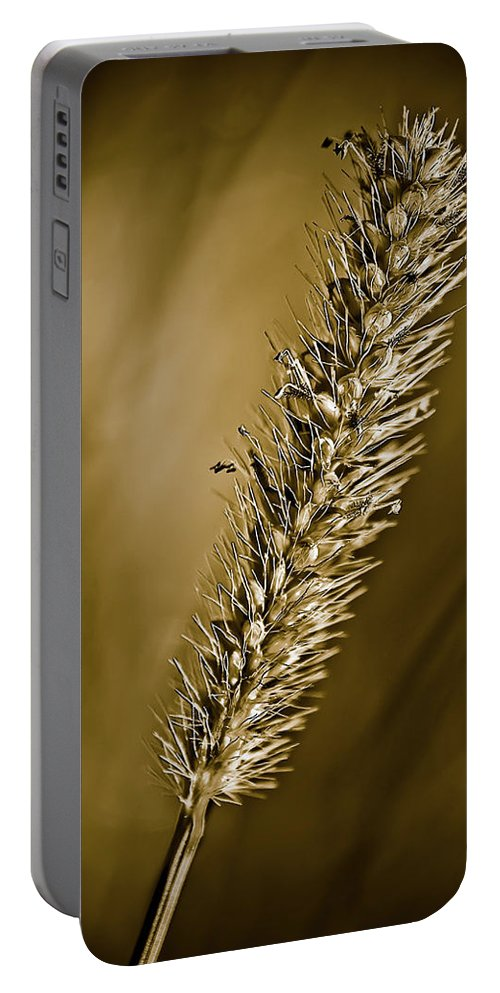 Grass Seed Portable Battery Charger featuring the photograph Grass Seedhead by Onyonet Photo Studios