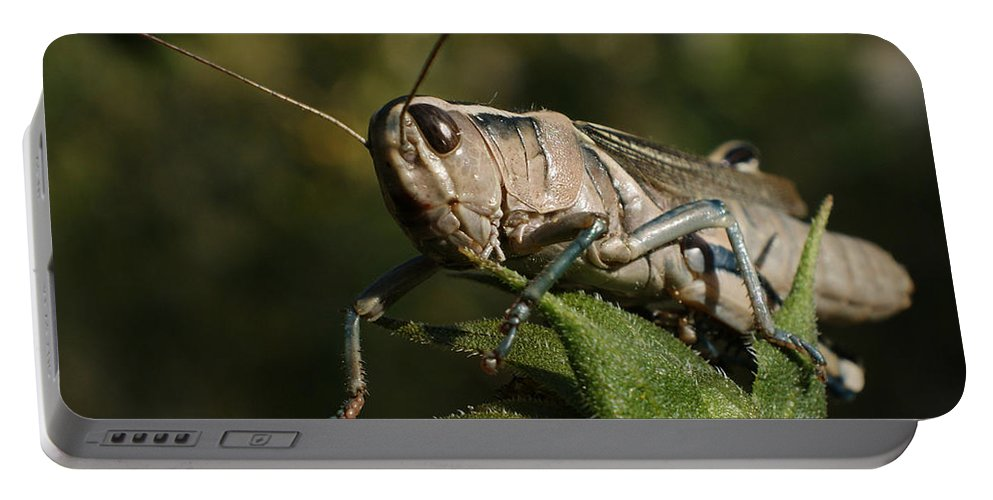 Grasshopper Portable Battery Charger featuring the photograph Grasshopper 2 by Ernie Echols