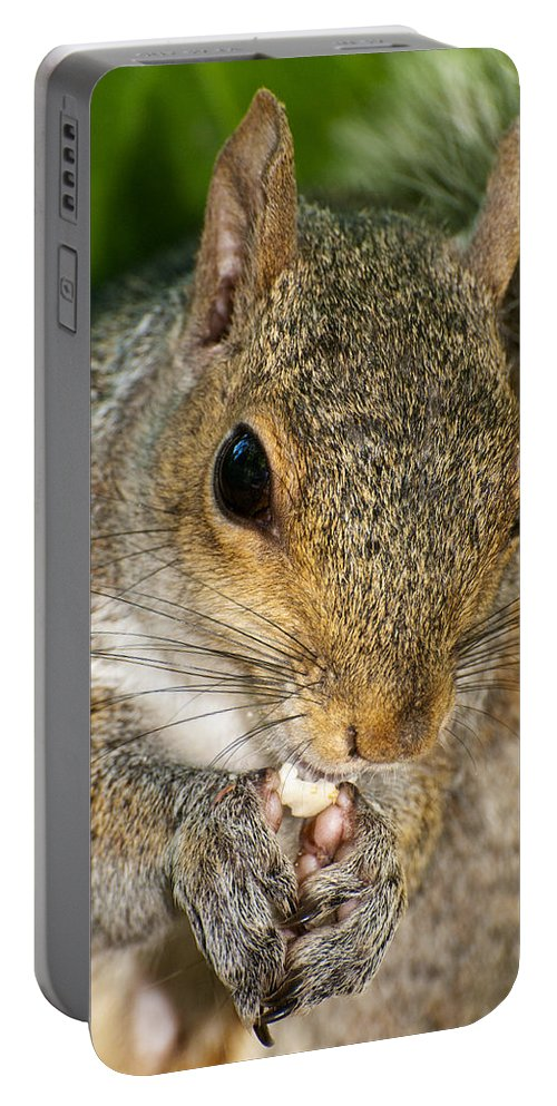Close Up Portable Battery Charger featuring the photograph Gray Squirrel by Fabrizio Troiani