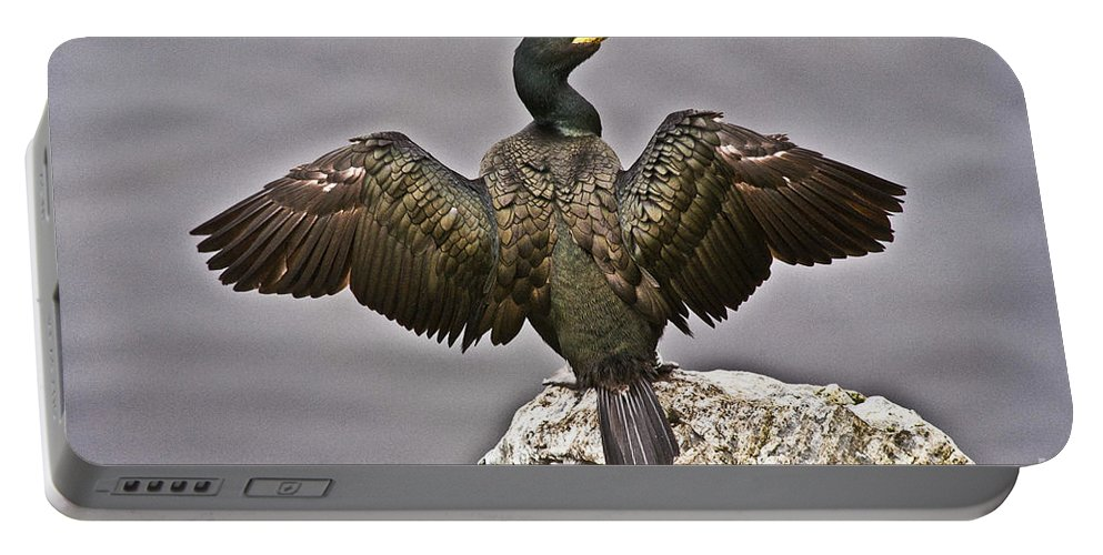 Nature Portable Battery Charger featuring the photograph Great Black Cormorant II by Heiko Koehrer-Wagner