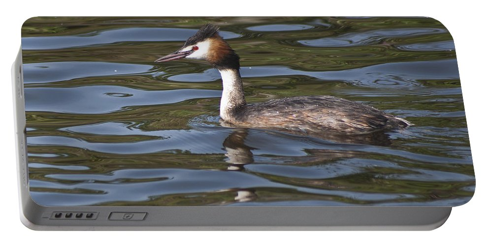 Great Crested Grebe Portable Battery Charger featuring the photograph Great Crested Grebe by Steve Purnell