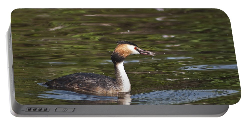 Great Crested Grebe Portable Battery Charger featuring the photograph Great Crested Grebe With Breakfast by Steve Purnell