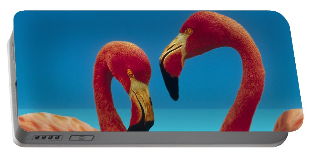 00172310 Portable Battery Charger featuring the photograph Greater Flamingo Courting Pair by Tim Fitzharris