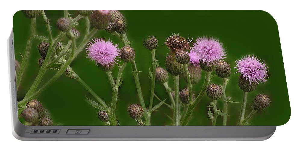 Flower Portable Battery Charger featuring the photograph Green And Purple by Ian MacDonald
