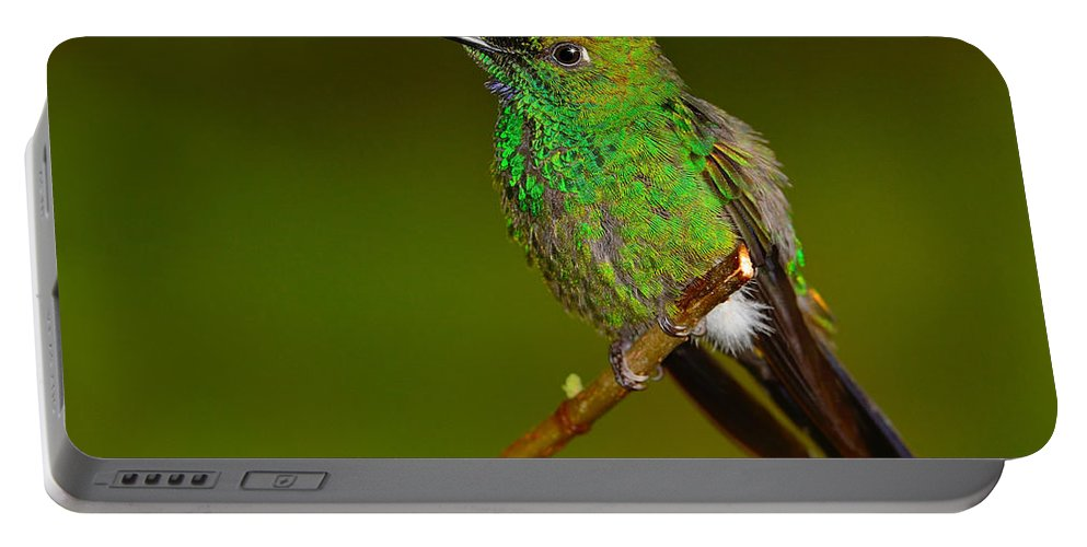 Green-crowned Brilliant Portable Battery Charger featuring the photograph Green-crowned Brilliant by Tony Beck